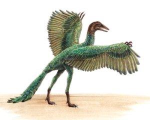 archaeopteryx7